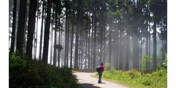 Darjeeling 004