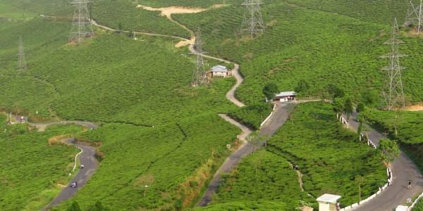 Darjeeling 007