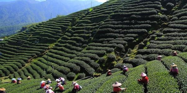 Darjeeling 008