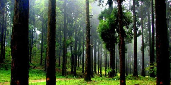 Darjeeling 009