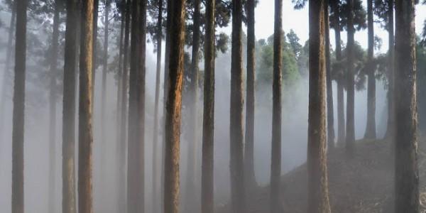 Darjeeling 010